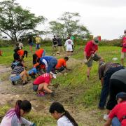 Volunteers from all across 'Ewa worked hard to remove the batis